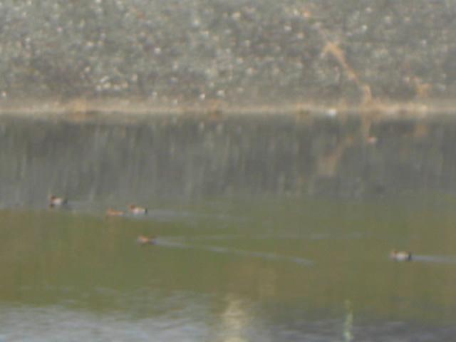 2008/3/12の川面
